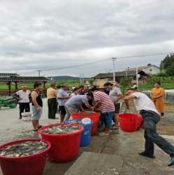 高酿镇:为农户免费发放鱼苗4000斤